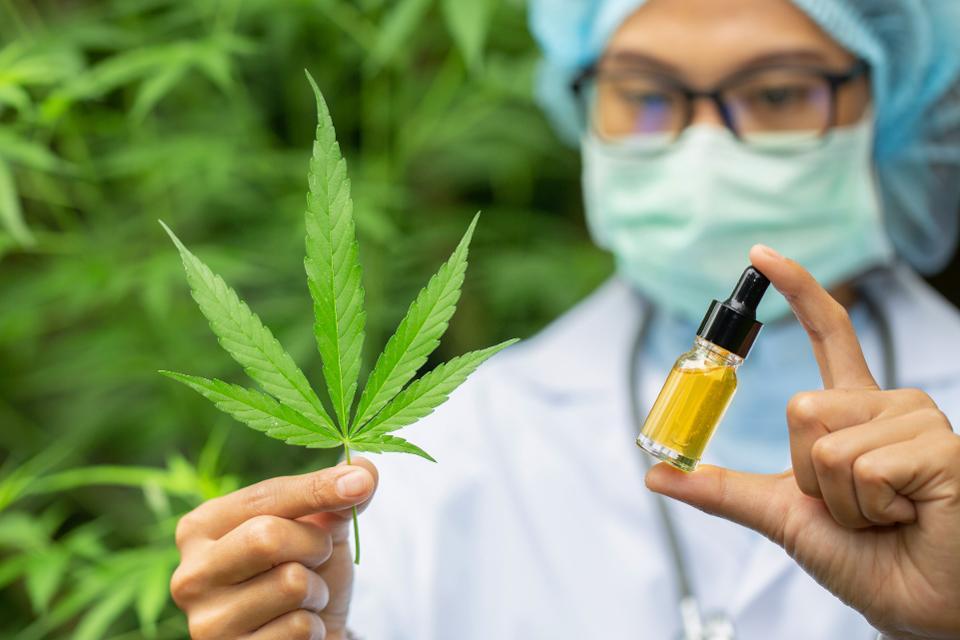 Правила покупателя марихуаны какая нужна земля для посадки конопли