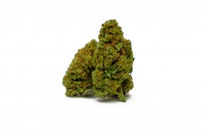 "Banana Kush | Indoor Grow <span style=""color: #ff0000;""><strong>SOLD OUT</strong></span>"