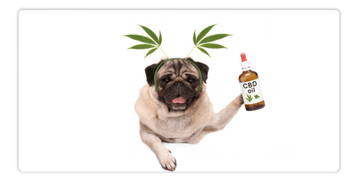 Which CBD Oil is Best for Dogs?