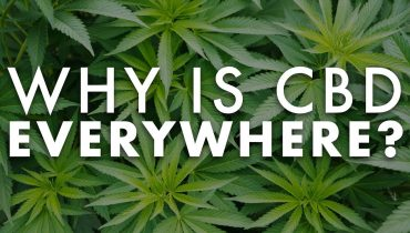 Why is CBD Everywhere?