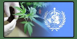World Health Organisation CBD