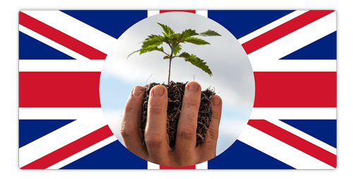 uk cbd law