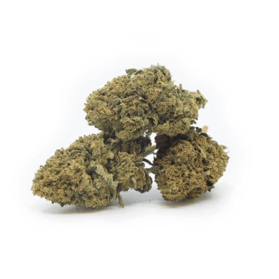 "Gelato | Indoor Grow <span style=""color: #ff0000;""><strong>SOLD OUT</strong></span>"