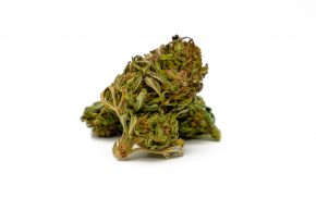 "GMO Cookie | Greenhouse Grow | VAT in <span style=""color: #ff0000;""><strong>SOLD OUT</strong></span>"
