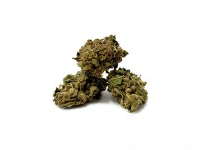 "Lemon Haze | Outdoor Grow | VAT in <span style=""color: #ff0000;""><strong>SOLD OUT</strong></span>"